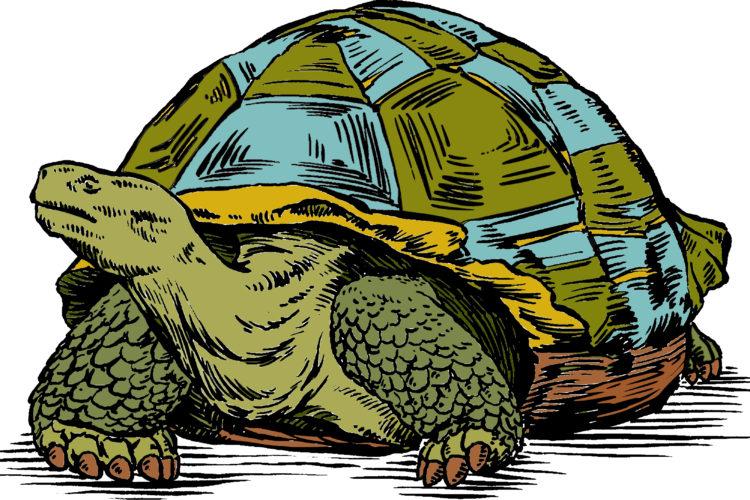 Old Turtle Img